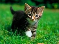 CAT036