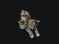 CAT038