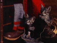CAT141