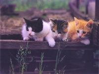 CAT144