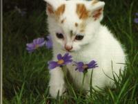 CAT23