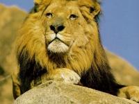LIONA8