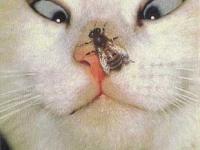 cat&muha
